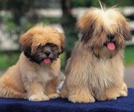 Small House Dogs